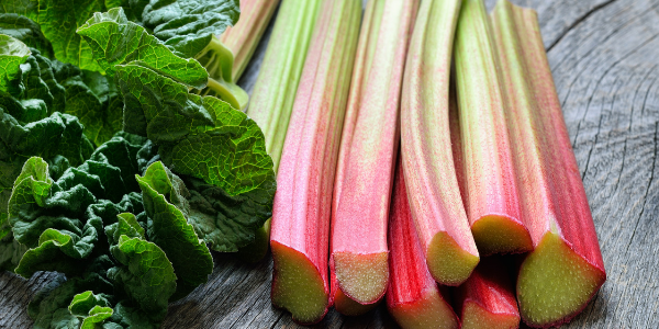The Health Benefits of Rhubarb as You Age